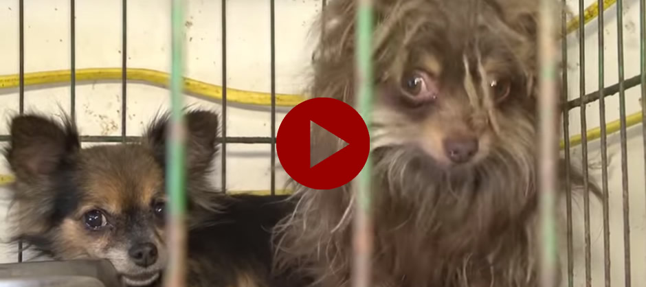 See the Dogs Being Saved by the Anti-Puppy Mill Effort